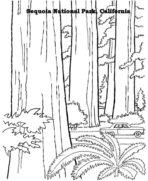coloring page of redwood tree free printables for sequoia national park arbor day