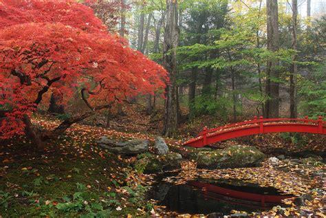 Japanese Maple Garden by Japanese Maple Garden With Bridge Photograph By