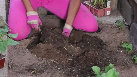 vegetable garden clay soil how to plant vegetables in clay soil ehow