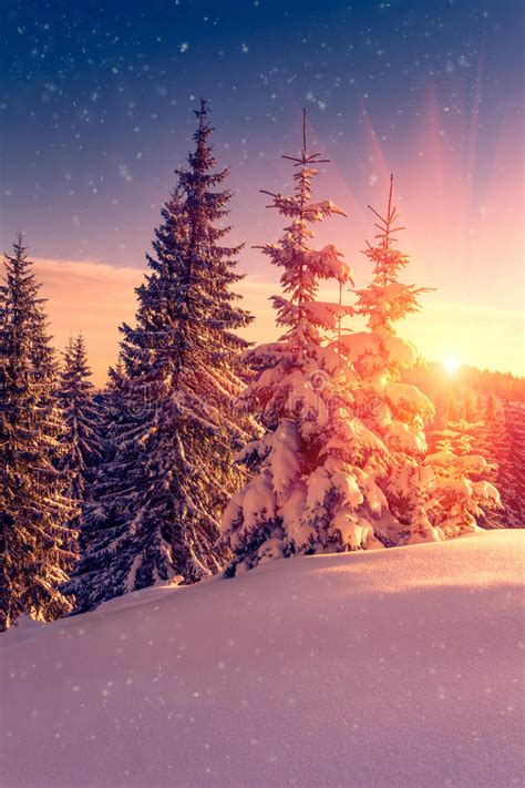 beautiful winter landscape  mountains view  snow covered conifer trees  snowflakes
