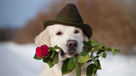 puppy valentines puppies to deliver flowers on s day
