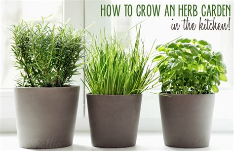 Grow Herbs In Kitchen | 5 ways to grow an herb garden in the kitchen