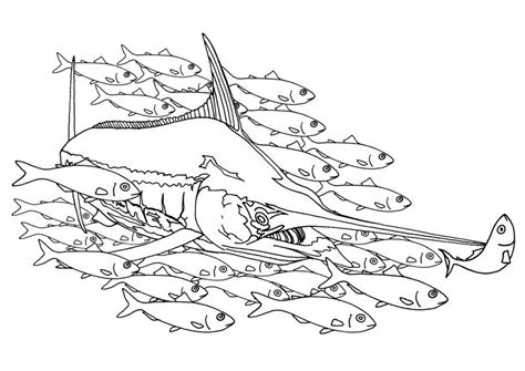 coloring page school of fish coloring page swordfish in a school of fish img 9483