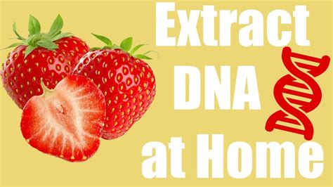 dna extraction from strawberries ppt video online download
