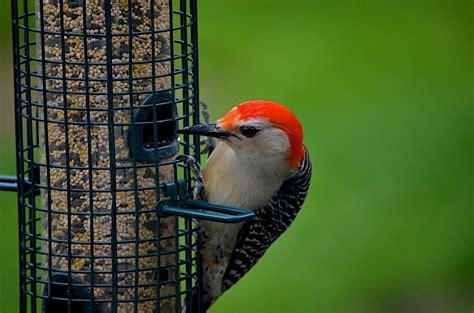 bird feeders for your backyard blain s farm fleet blog