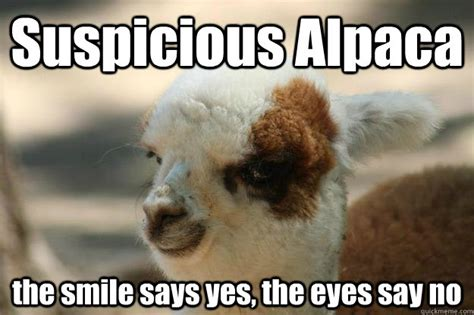 Alpaca Memes - suspicious alpaca the smile says yes the eyes say no