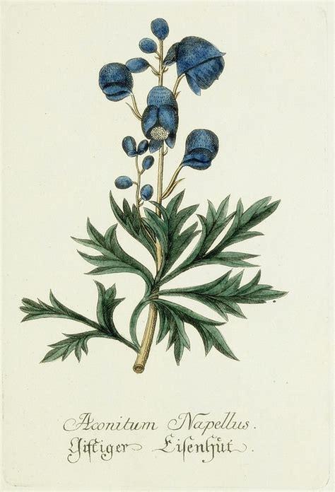 printable botanical art free printable royal blue and yellow botanical art