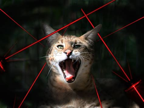laser light for cats big cats vs laser pointers