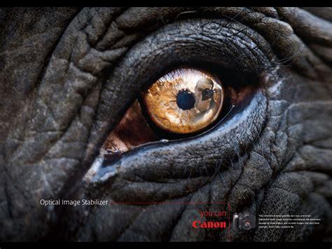 canon quot elephant eye quot
