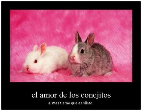 imagenes tiernas haciendo el amor imagenes de conejos de amor para tu pareja imagenes de