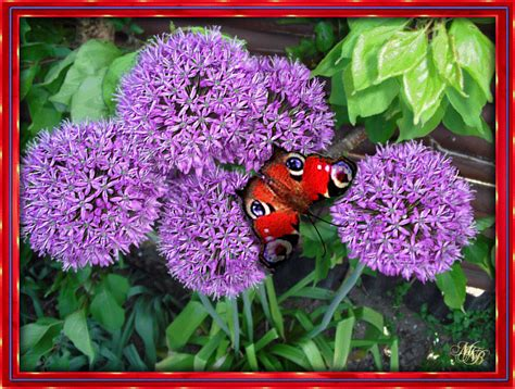 garten neuheiten garden news