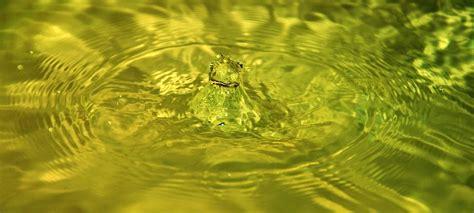 wann ist wasser am schwersten wann ist weltwassertag weltwassertag ist das n 228 chste