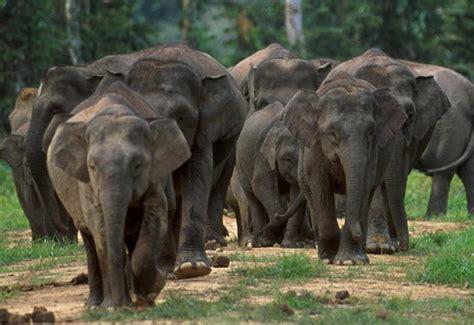8 Heartbreakingly Adorable Endangered Animals That We Need ...