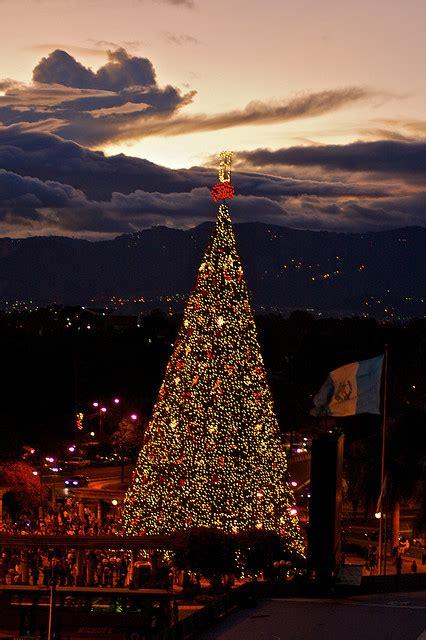 imagenes de navidad en guatemala guate360 com fotos de arbol gallo el arbol gallo la