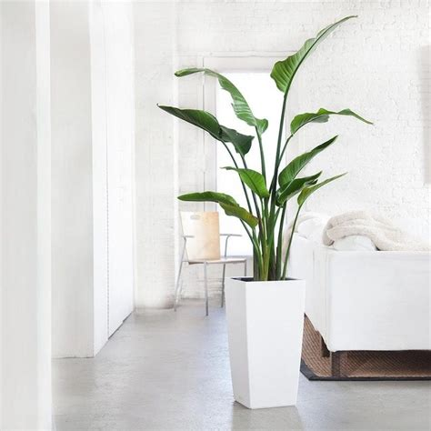 como decorar  plantas de interior grandes