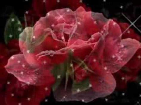 un fiore per te dentro all anima un fiore per te