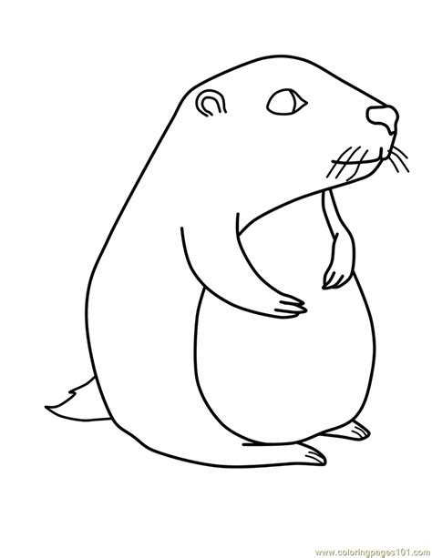 groundhog coloring page groundhog coloring page free groundhog or woodchuck