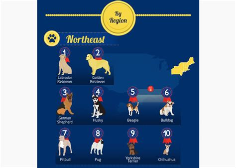 which state has the most dog owners per capita 2016 most popular dog breeds in the united states by region