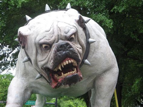 meanest dogs meanest dogs breeds picture