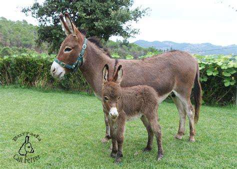 burros con yeguas burros cojiendo burras y yeguas sh 1314