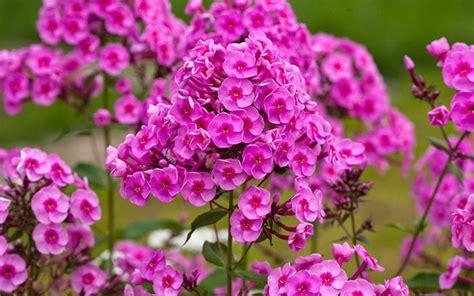 Garten Pflanzen Juli by My Top 3 Plants To Give Your Garden Great Seasonal Colour