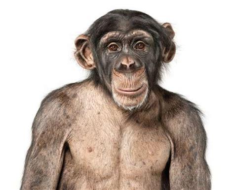 By Andrew Zuckerman humanistic animal portraits andrew zuckerman