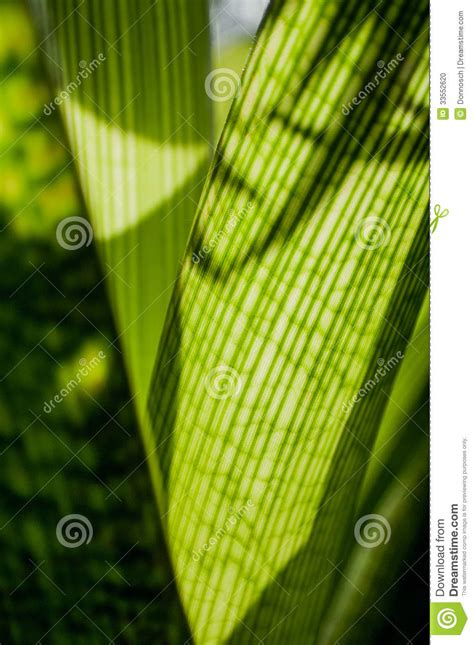 calming green calming green series stock photo image 33552620