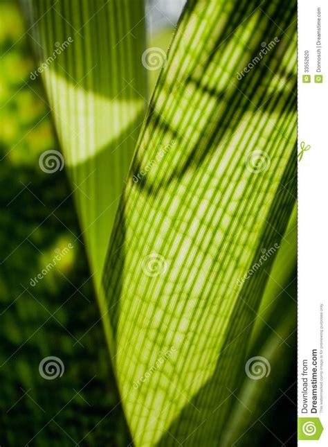 calming green calming green series stock photo image 33552620