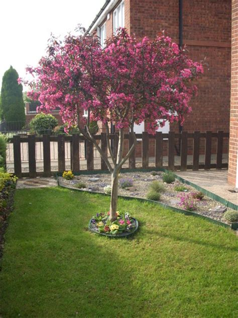 blossom tree in front garden grows on you