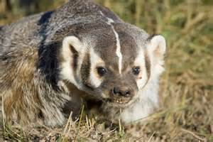 a to z the usa wisconsin state mammal