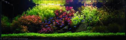 Freshwater Aquascaping Designs Getting Started With Aquascaping Aquascaping Love