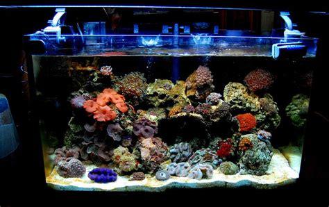 reefkeepers