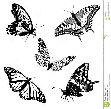 imagenes de mariposas blancas y negras mariposas blancas negras determinadas de un tatuaje foto