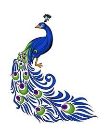 25 best ideas about peacock images on pinterest