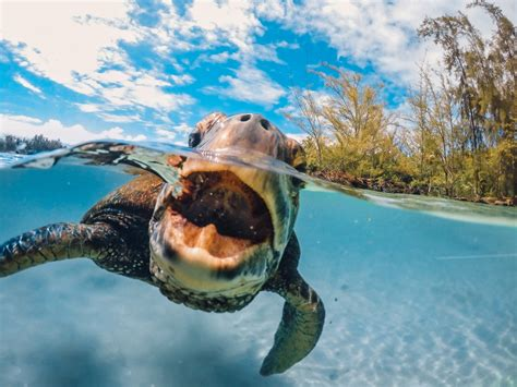 picture of day gopro hello turtle photo of the day tad