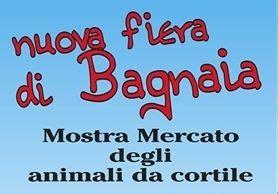 mercato animali da cortile mostra mercato animali da cortile alla nuova fiera di bagnaia