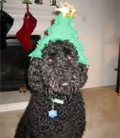 puppy love pet care llc customer testimonials