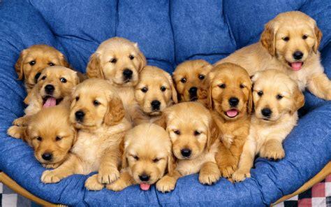 fotos animales tiernas fotos de perros tiernos