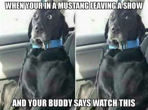 Hilarious Funny Memes - 30 hilarious mustang memes about their constant crashes
