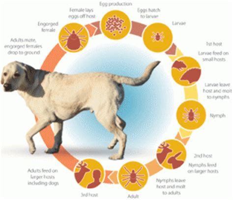 what is s disease in dogs symptoms of lyme disease braxtons animal works