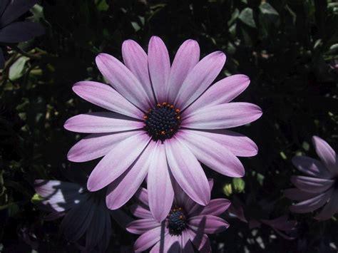 imagenes flores de otoño sfondi per lo schermo fiori di co singoli
