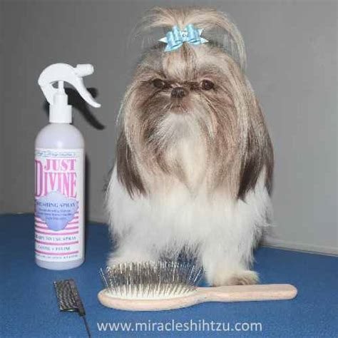 shih tzu bow shih tzu bows descriptions reviews how to with photos