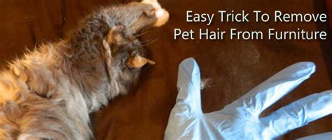how to get dog hair off the couch easy trick to remove pet hair from furniture carter s carpet
