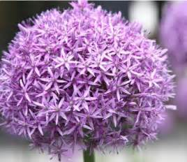 purple flower garden purple garden flowers jpg hi res 720p hd