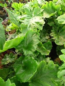 plante d interieur ombre wehomez