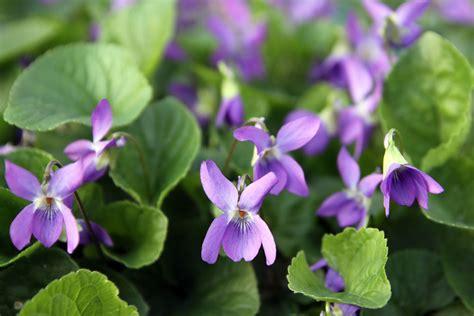 giardini della versilia esposizione vendita piante e fiori pietrasanta giardini