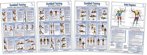 exercise books and posters the dumbbell poster