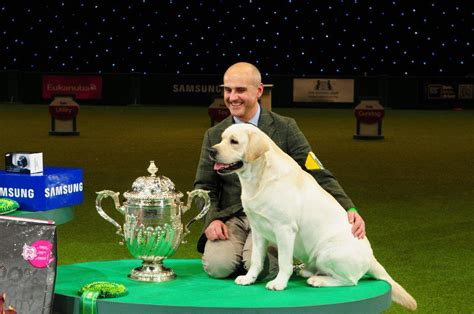 best in 2013 crufts 2013 results