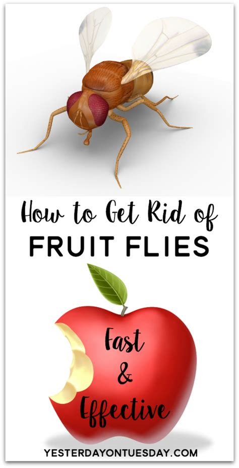 how do you get rid of flies in your backyard how do you get rid of flies in your backyard how to get rid of fruit flies yesterday