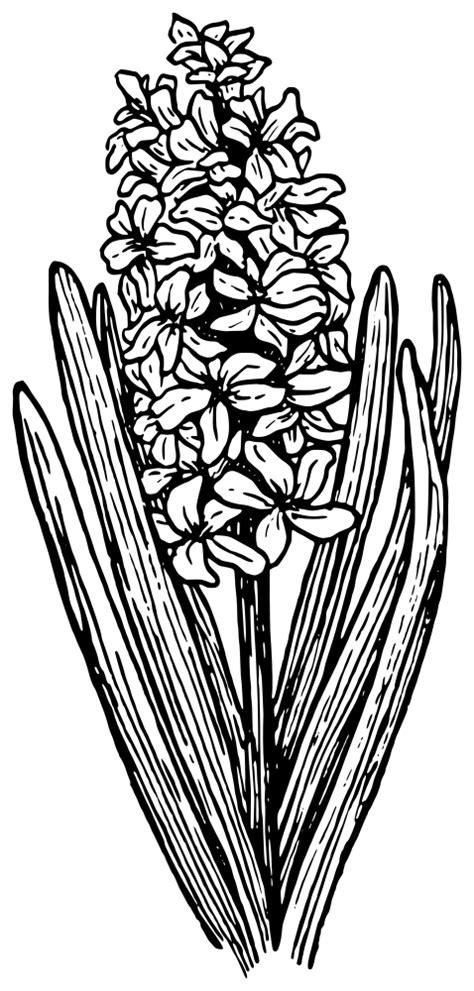 OnlineLabels Clip Art - Hyacinth